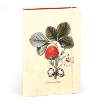 utilapu notesz erdbeer aus chili