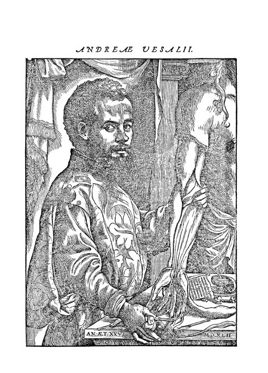 Andreas Vesalius portré