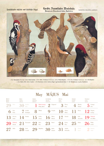 Madarak 2013-as naptár