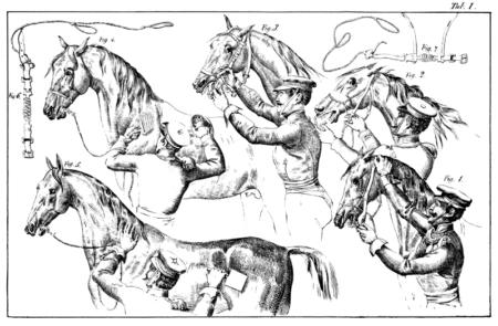 die zahmung des pferdes